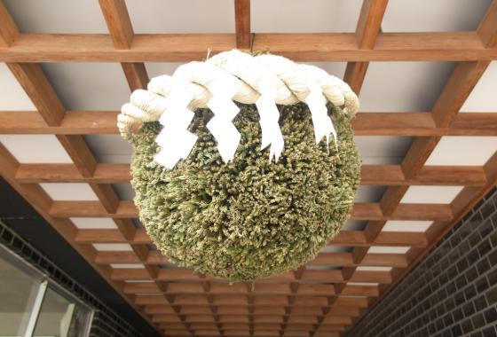 Welcome to Dewazakura - sugidama from Japanese cedar